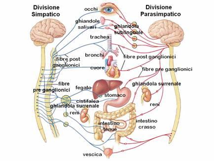 La tosse cronica quali sono le cause della tosse cronica